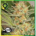 S.A.D. Sweet Afghani Delicious S1