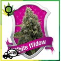 White Widow Royal