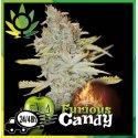 Furios Candy