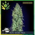 Auto Skunk Mass