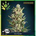 Ice Kush