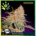 Black Diesel