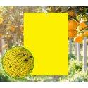 Trampas adhesivas amarillas